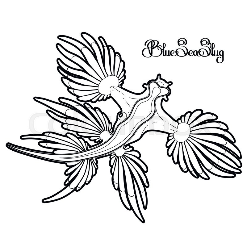 800x800 Glaucus Atlanticus. Blue Sea Slug Drawn In Line Art Style. Blue