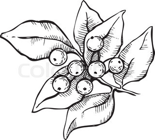 320x290 Hand Drawn Holly. Christmas Mistletoe Plant. Christmas And Holiday