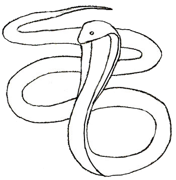 350x358 How To Draw A Snake