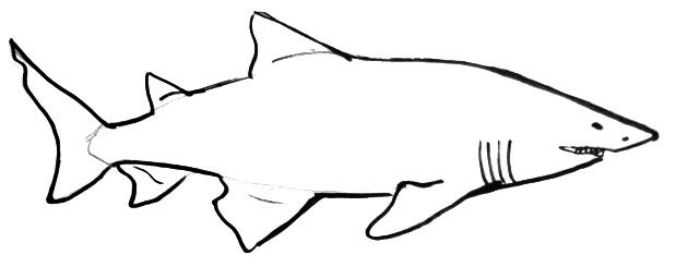 How To Draw A Shark | Free download on ClipArtMag