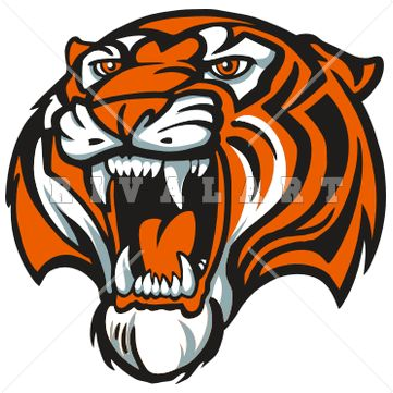 361x361 White Tiger Clipart Tiger Mascot