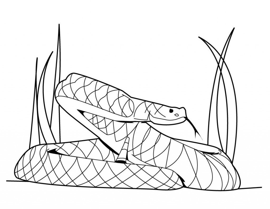 1024x792 Drawn snake printable