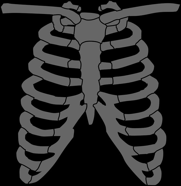 703x720 Ribcage Skeleton Clipart, Explore Pictures