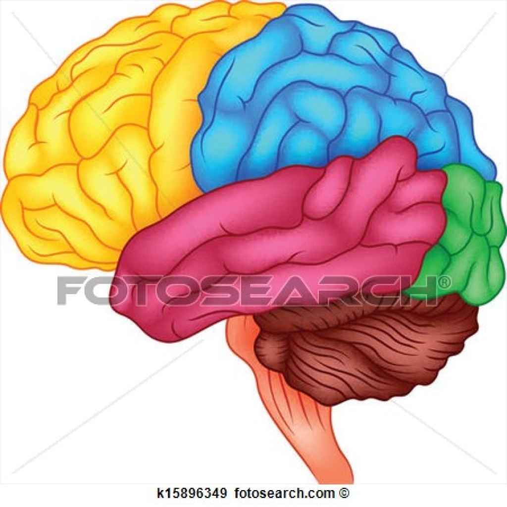 1024x1024 Human Brain Clipart Human Brain Clipart Drawings Of Human Brain