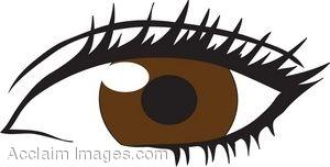 300x152 Human Eye Clip Art 1386 0904 3008