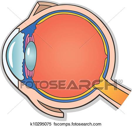 450x433 Clipart Of Human Eye Cross Section K10295075