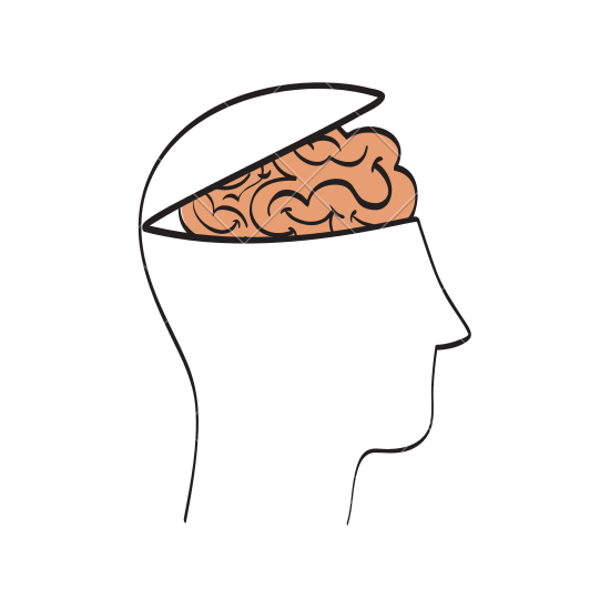 550x550 Human Head And Brain Outline