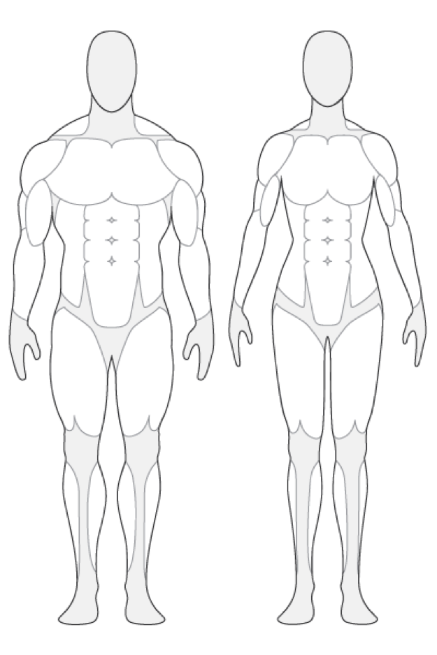 625x938 Human Body Muscle Outline