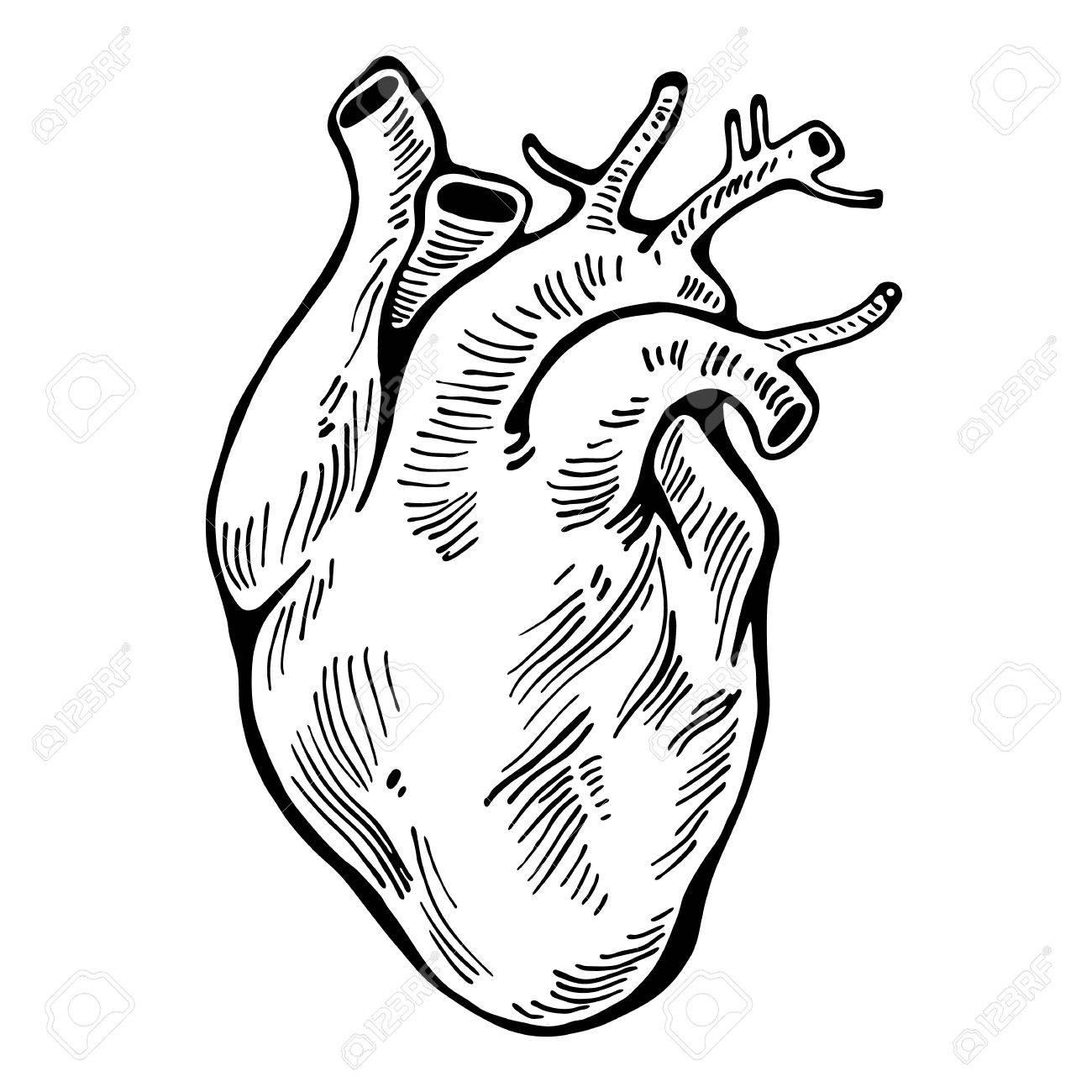 1300x1300 Human Heart Black Line, Tattoo, Organ Vector Illustration Royalty