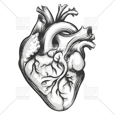 400x400 Human Heart Drawn In Engraving Style Royalty Free Vector Clip Art