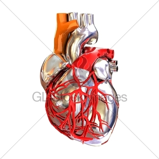 325x325 Human Heart And Skeleton Gl Stock Images