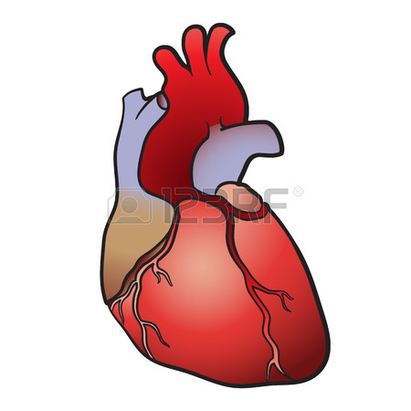 450x450 The Contour Image Of A Human Heart Royalty Free Cliparts, Vectors