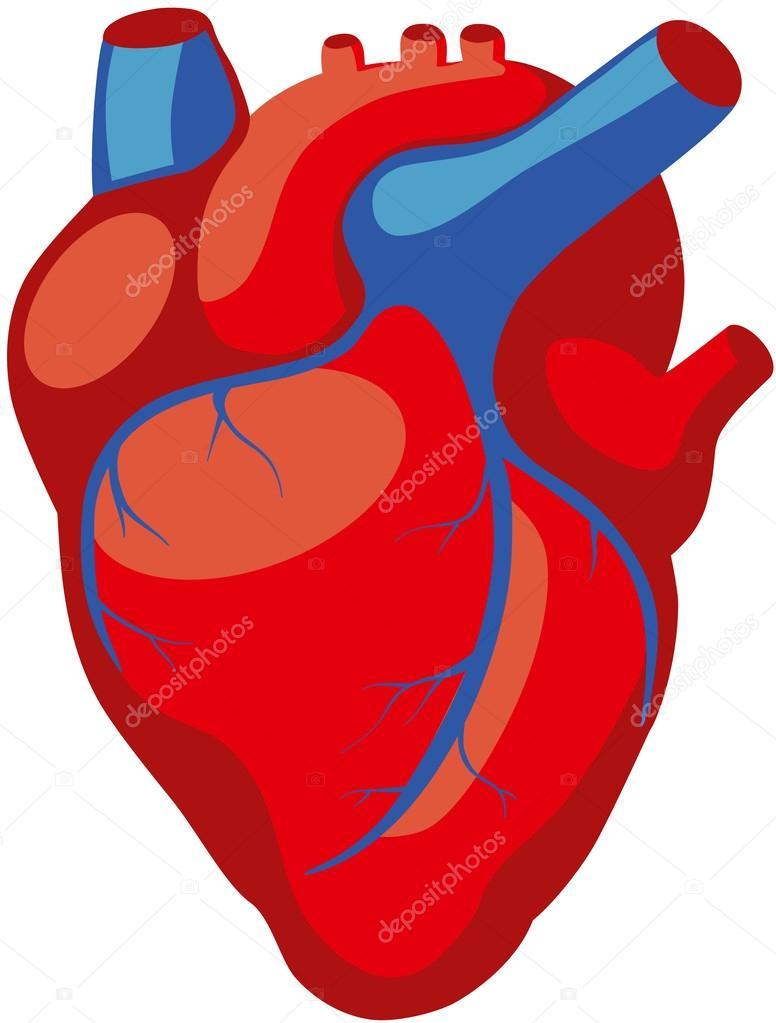 Human Heart Images | Free download on ClipArtMag