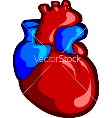 380x400 Human Heart Vector Item 4 Clipart Panda