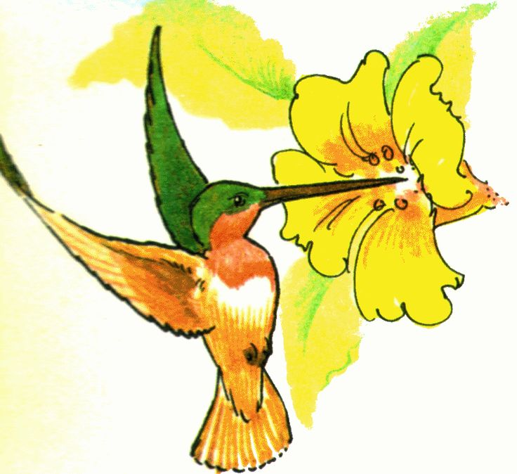 736x674 158 Best Humming Bird Images Caterpillar, Crystals