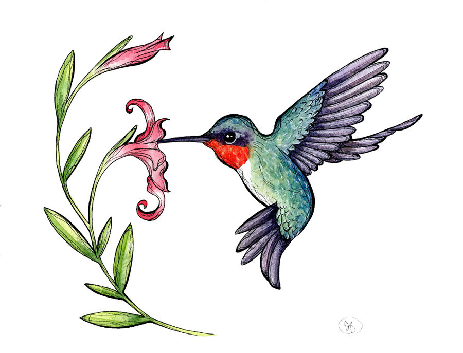 900x687 Hummingbird Clipart Free Clipart Images Image