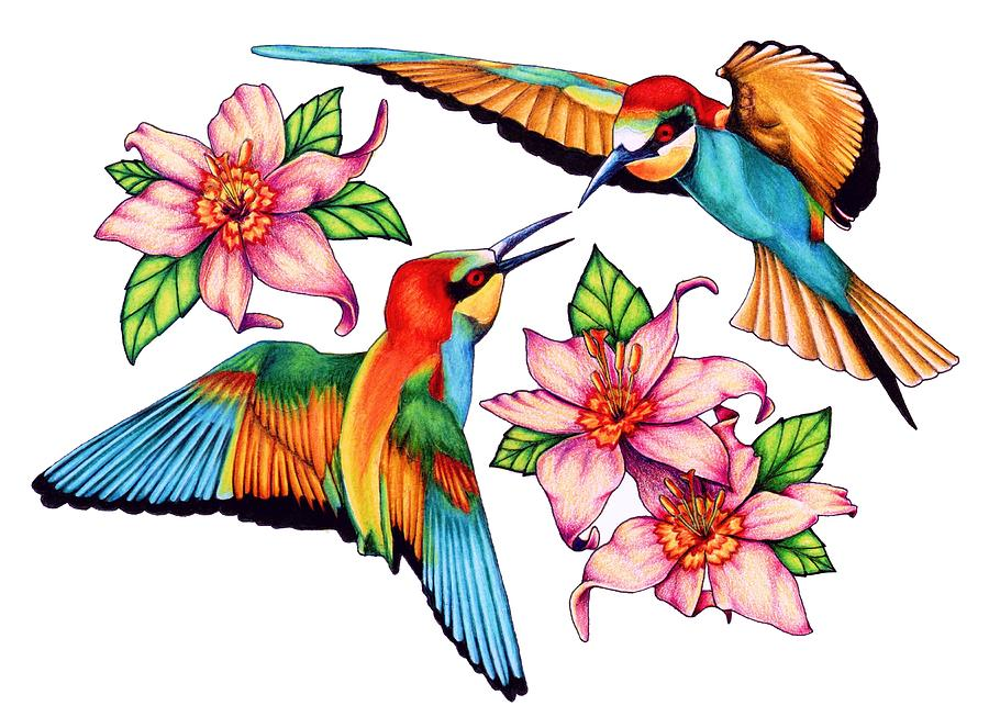 900x663 Hummingbird Graphics