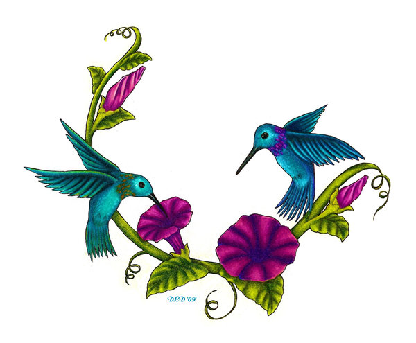 600x495 Hummingbird Graphics