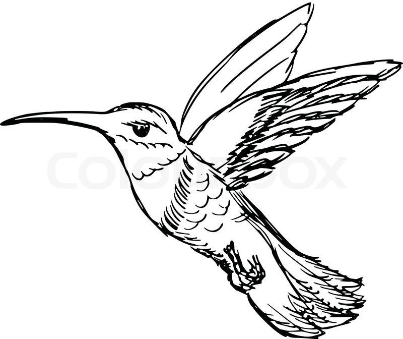 800x672 Hand Drawn, Sketch, Cartoon Illustration Of Hummingbird Stock