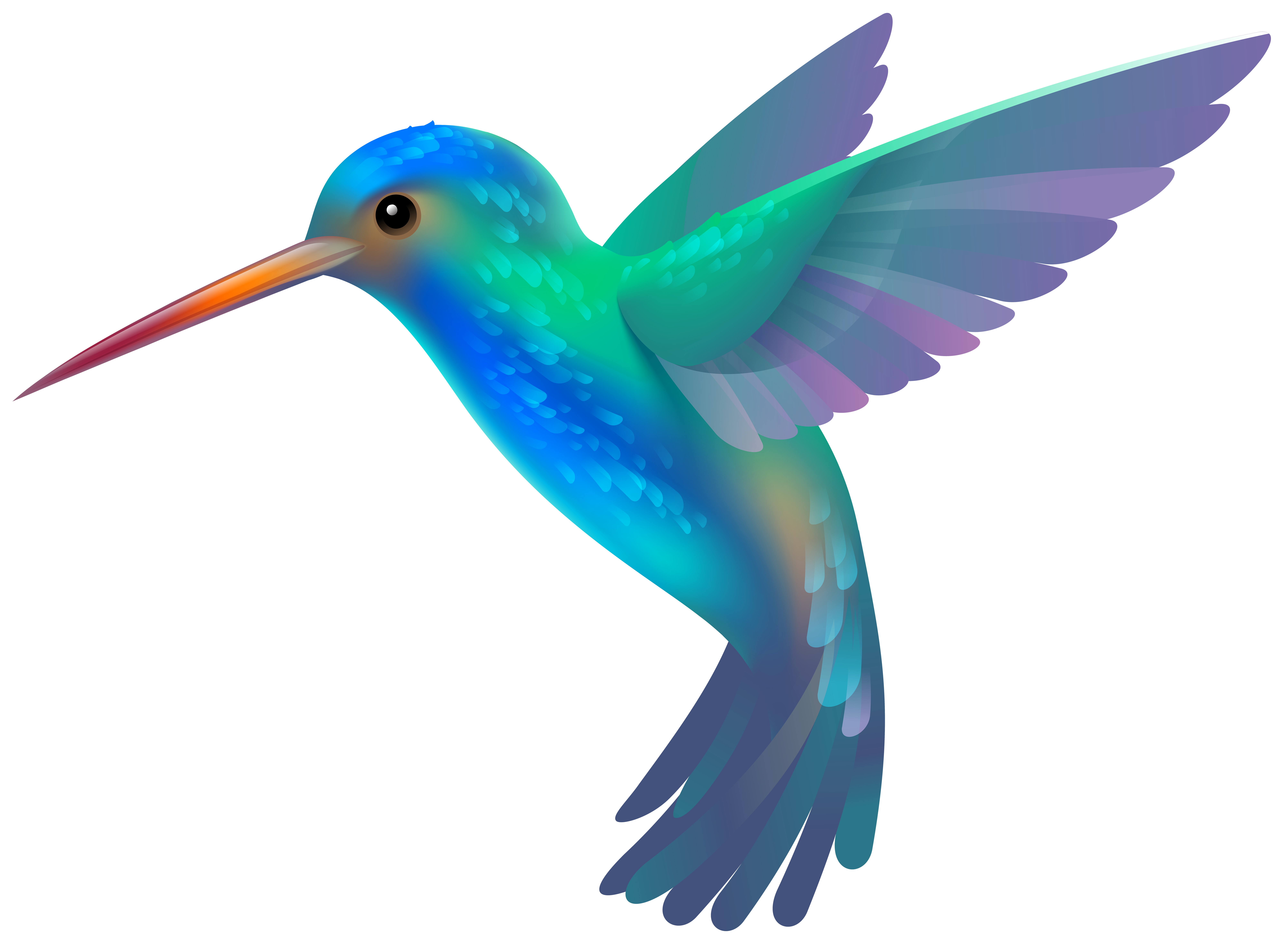 8000x5867 Hummingbird Pictures Clip Art