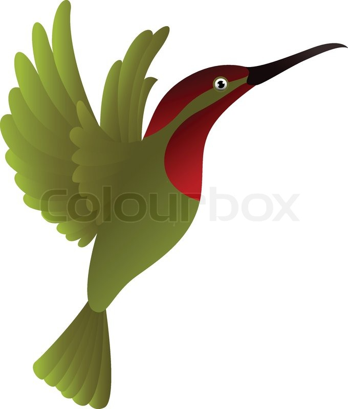 680x800 Hummingbird Cartoon Stock Vector Colourbox