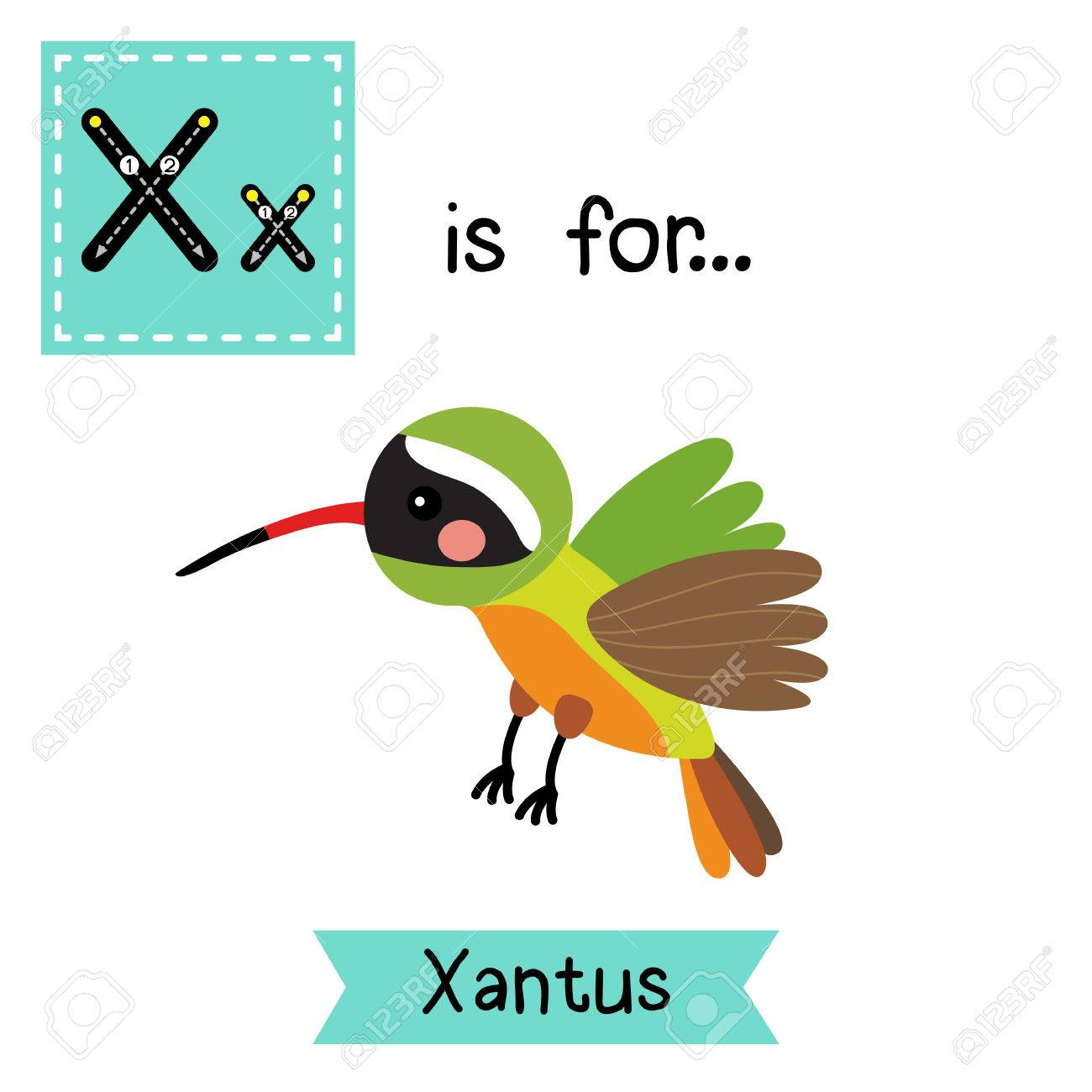 1300x1300 X Letter Tracing. Flying Xantus Hummingbird. Cute Children Zoo