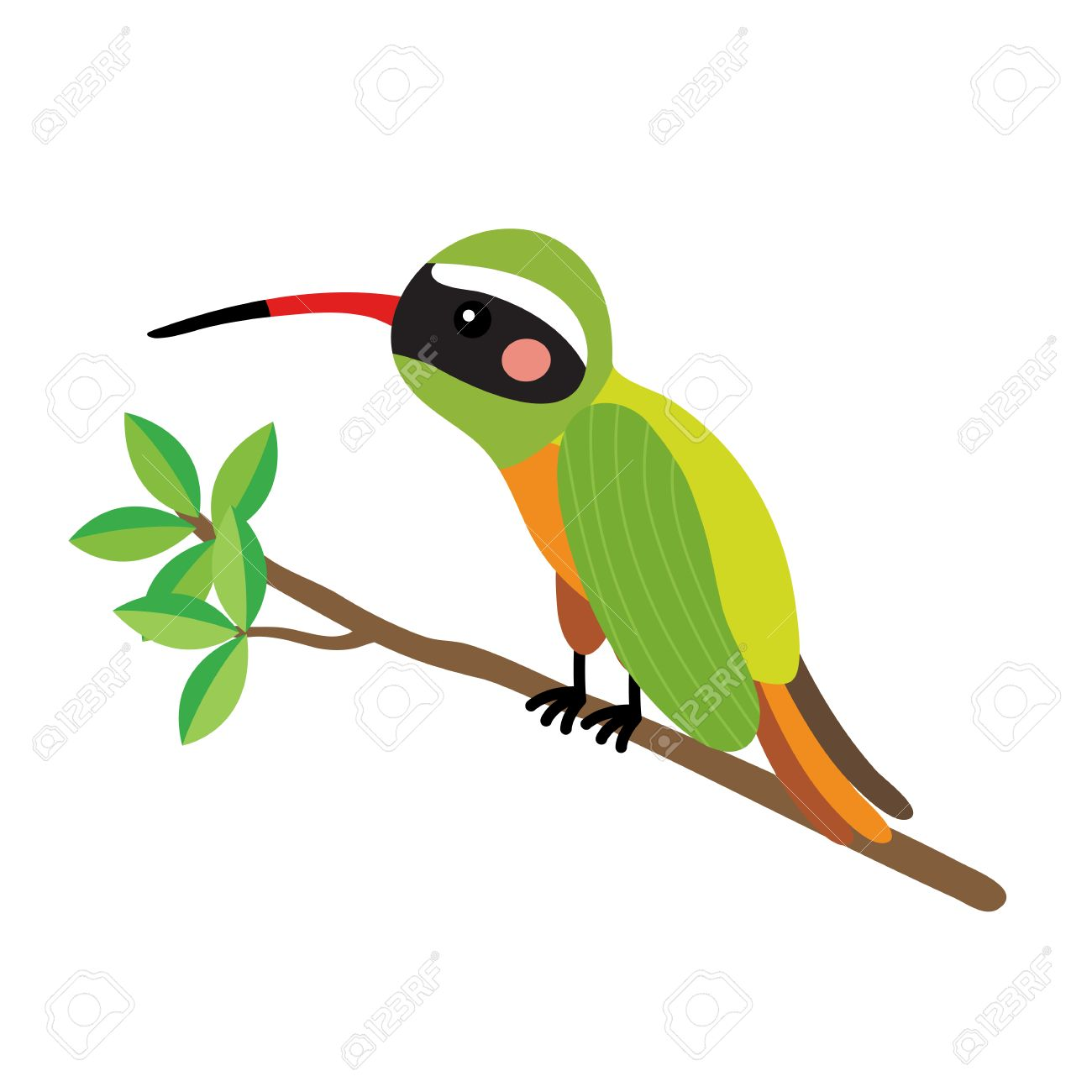 1300x1300 Xantus Hummingbird Perching Branch Animal Cartoon Character
