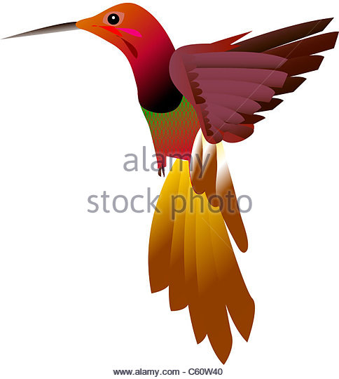 484x540 Cartoon Bird Images Stock Photos Amp Cartoon Bird Images Stock
