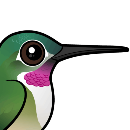 440x440 Cute Broad Tailed Hummingbird Cartoon By Birdorable