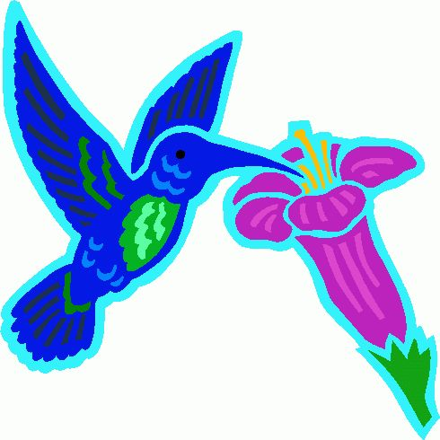 490x490 39 best hummingbird clipart images Pictures, Art