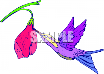 350x252 Royalty Free Hummingbird Clip Art, Bird Clipart
