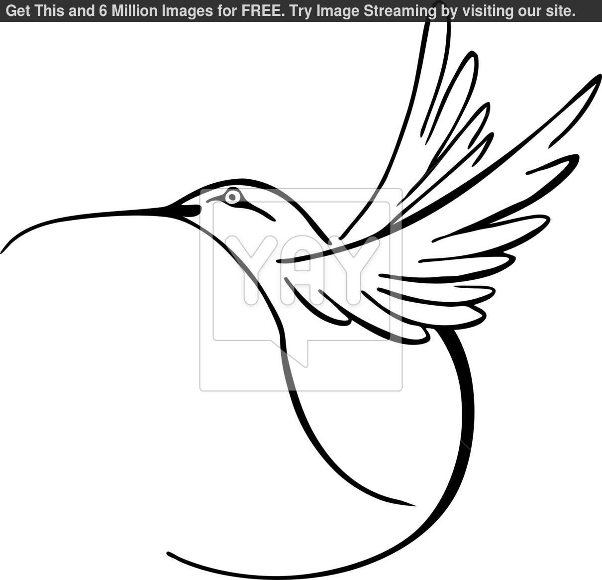 1210x1165 Clip Art Black And White Hummingbird Clipart