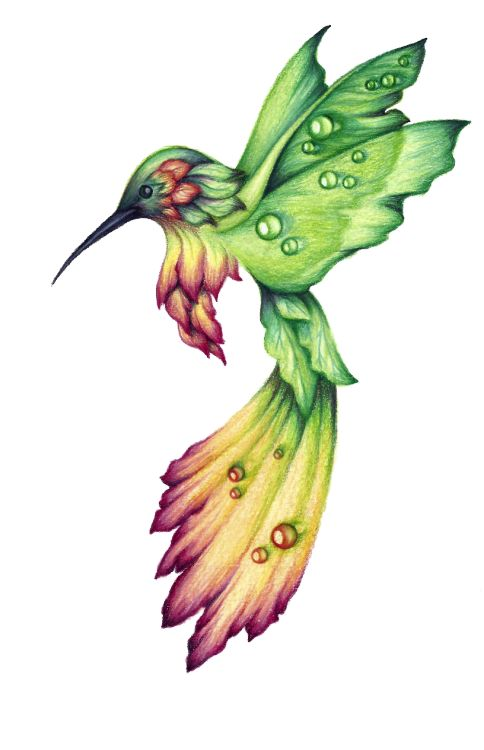 484x750 Best Hummingbird Drawing Ideas Watercolor