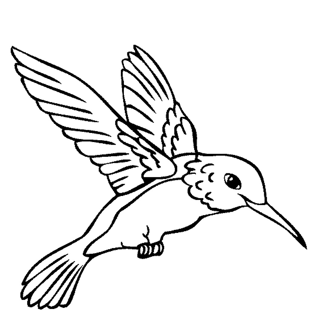 1050x1050 Hummingbird Coloring Pages