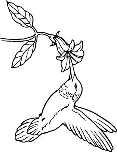 236x307 Hummingbird Coloring Pages