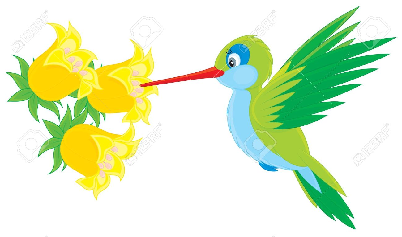 1300x769 Colibri Bird Clipart, Explore Pictures