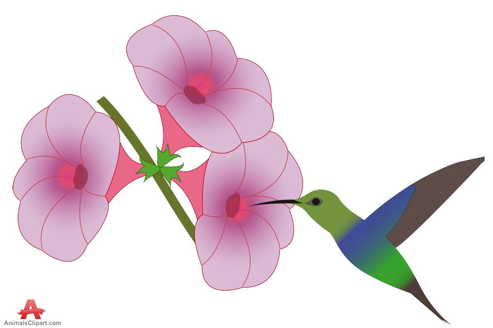 999x666 Flowers Hummingbird Clipart, Explore Pictures