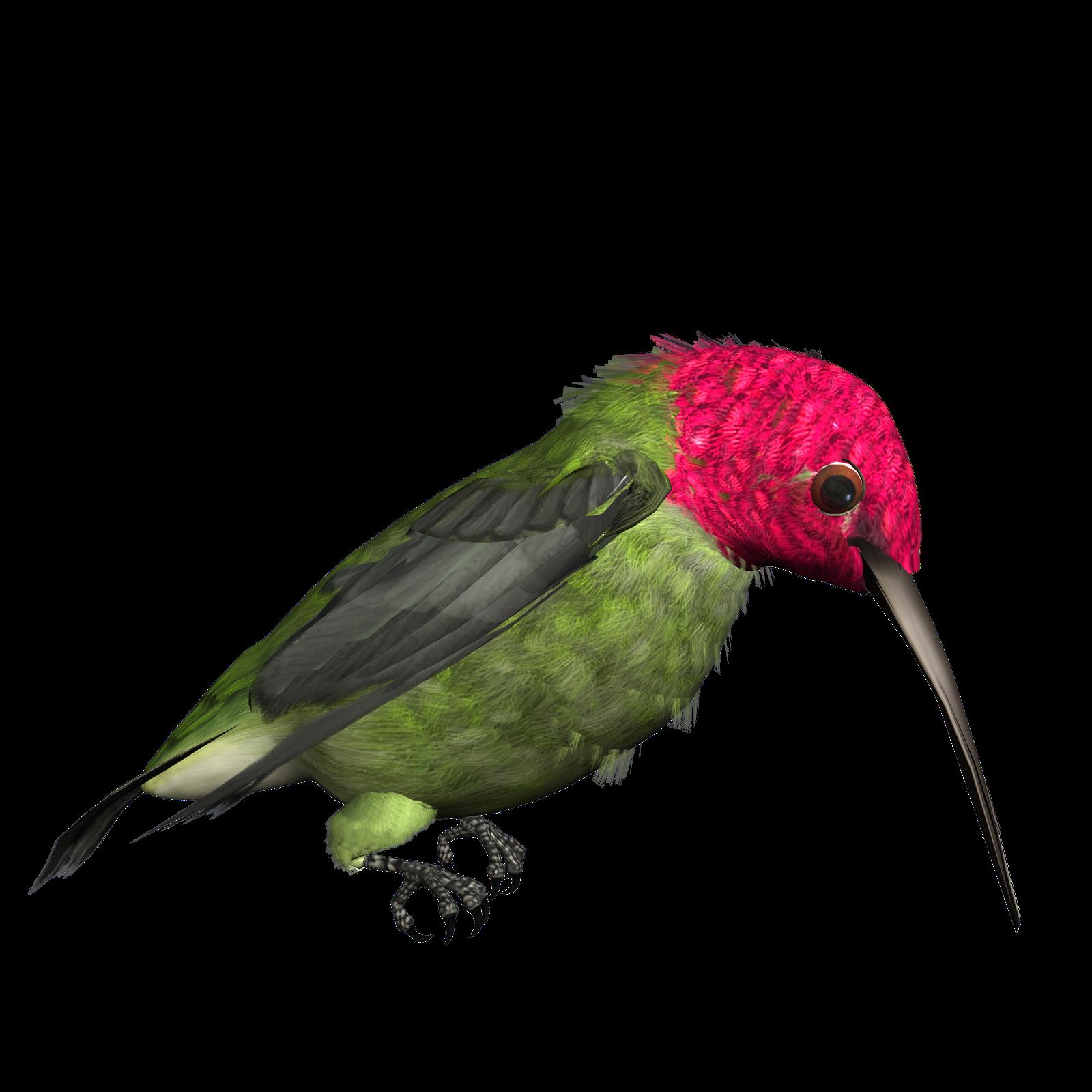 1600x1600 Hummingbird Clipart Clipart Panda