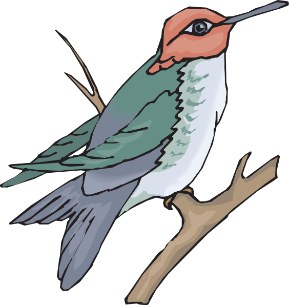 564x595 Hummingbird On A Branch Clip Art