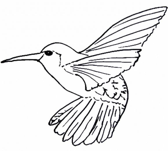 Hummingbird Line Art
