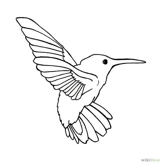 543x550 Drawn Hummingbird Cool Bird
