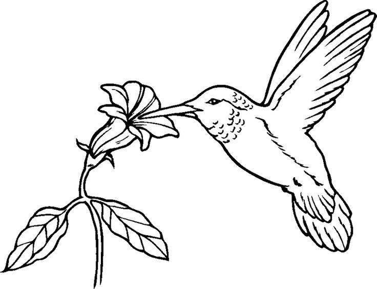 736x564 Drawn Hummingbird Majestic Bird