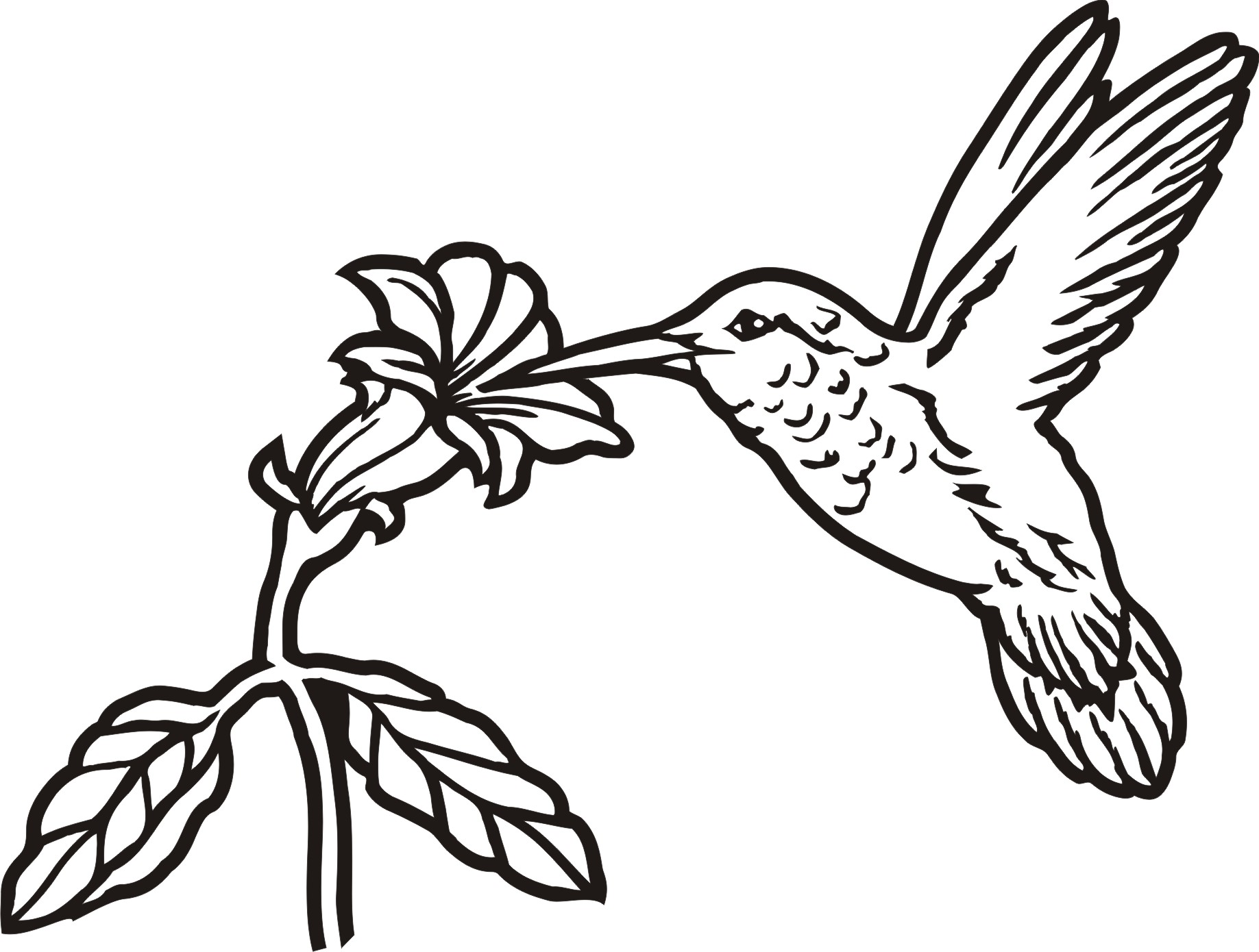 1837x1390 Drawn Hummingbird Outline