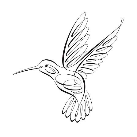 447x450 Fine Line Hummingbird Tattoo Design Hummingbird, Outlines