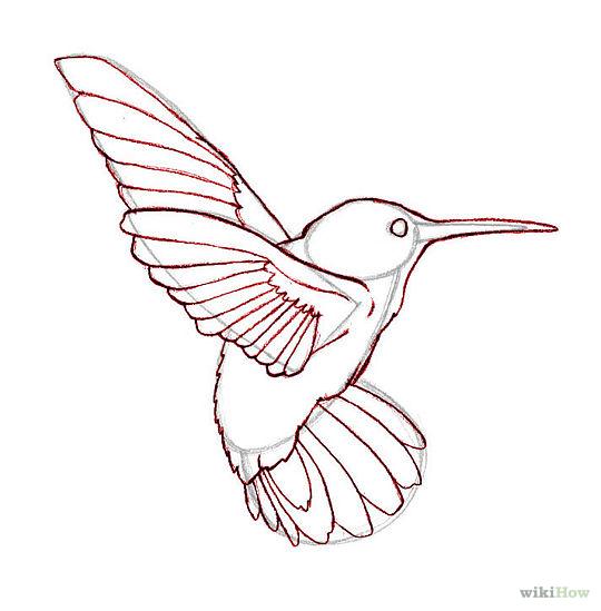 540x549 Hummingbird Clipart Realistic