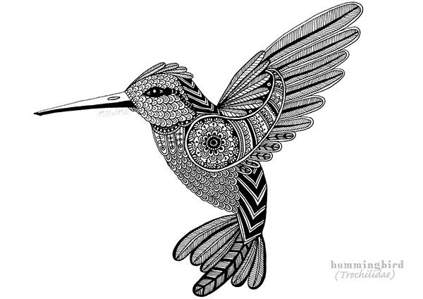 600x424 Hummingbird (Trochilidae) On Behance