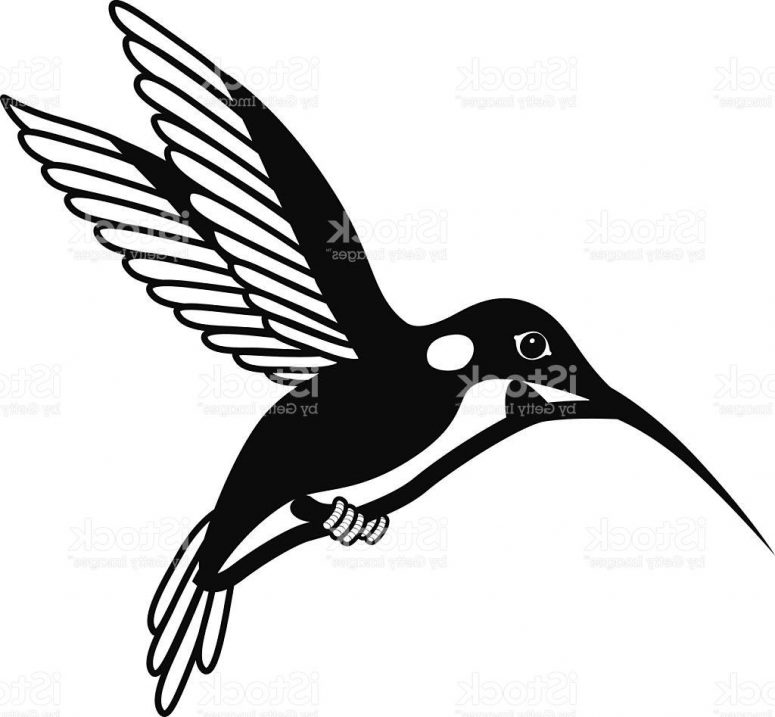 775x717 Best Hd Vector Black And White Hummingbird Vector Images Clip