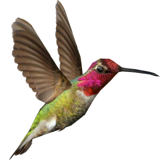 531x531 Ambient Anna's Hummingbird (Whalebite) Zt2 Download Library Wiki