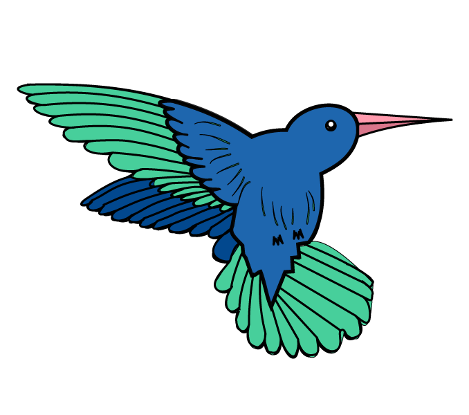678x600 How To Draw A Hummingbird Easy Step By Step Drawing Guides