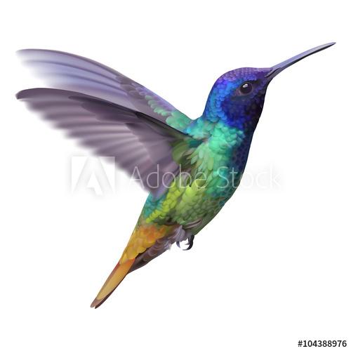 500x500 Hummingbird